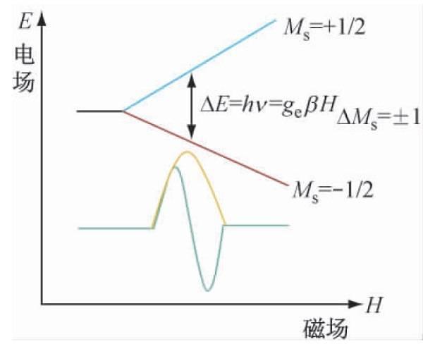 电子顺磁共振技术应用及进展